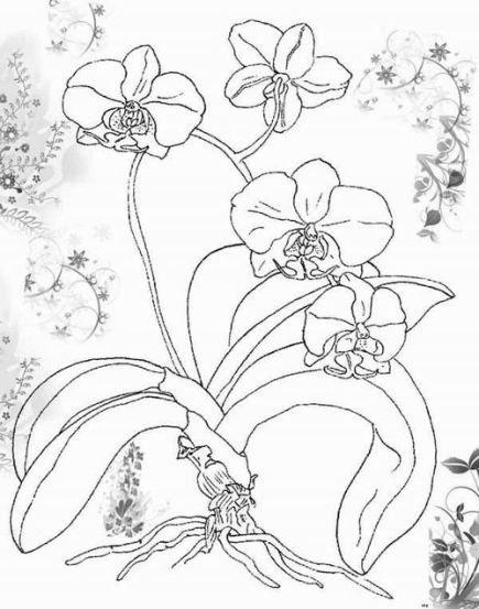 Ausmalbilder Fur Kinder Orchidee 5 Blumenzeichnung Ausmalbilder Orchideen