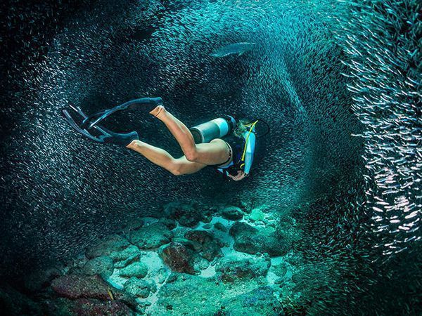 We've rounded up the best underwater cameras and housings to take scuba diving in 2017. #scubadivingquotes