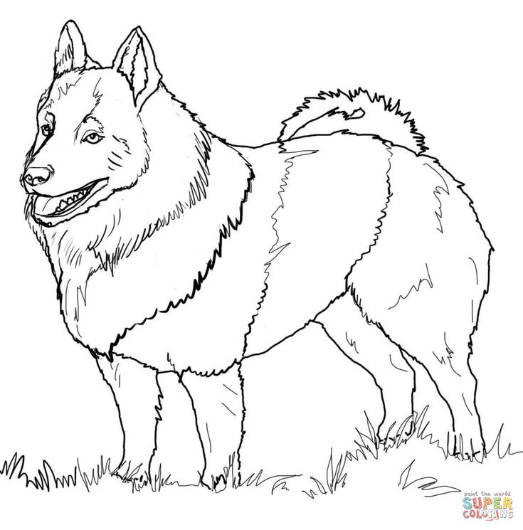Schipperke   Super Coloring (With images)   Dog coloring ...