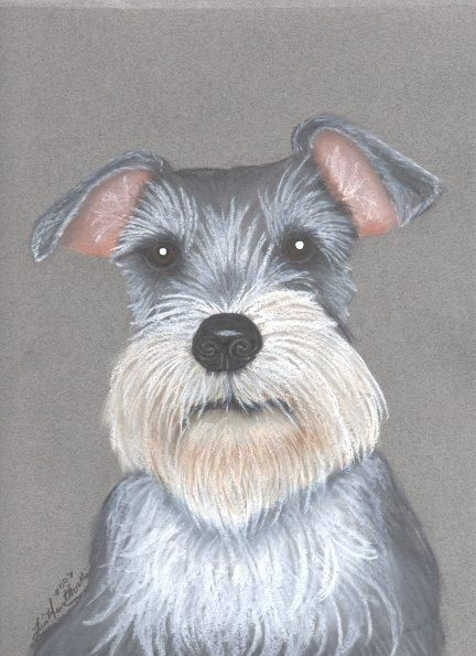Schnauzer Painting by Linda Henthorn - Schnauzer Fine Art Prints and Posters for Sale