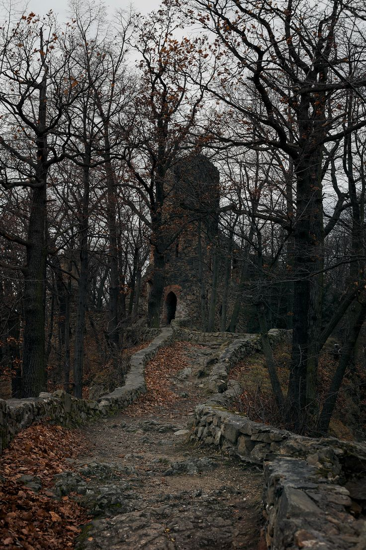 There Is A Forest In Southern Poland, With Some Spooky Ruins Situated On A  Hill
