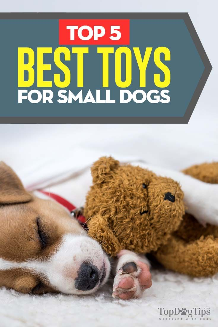 The 5 Best Toys For Your Small Dog Small Dogs Toy Puppies