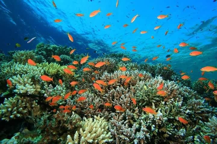 Diving activities in Madagascar