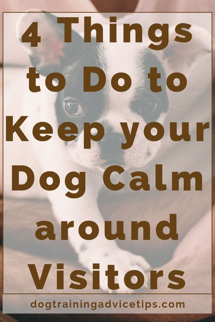 4 things to do to keep your dog calm around visitors in