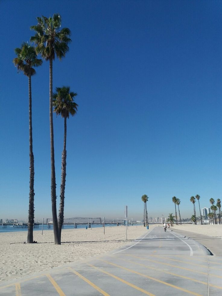 Beach California palm trees