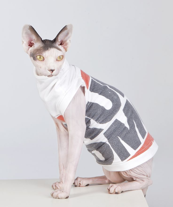 """RECYCLED VINTAGE RUN DMC T-  Sphynx Cat Wear, the Original sphynx clothing company.These """"one off's"""" will not be produced again. Get them while they are hot!"""