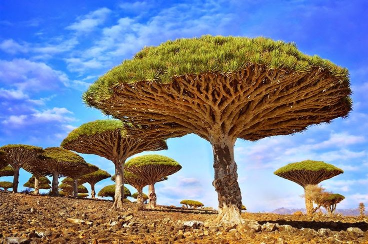 Amazing pictures for trees, Subhan Allah ~ Information about Islam