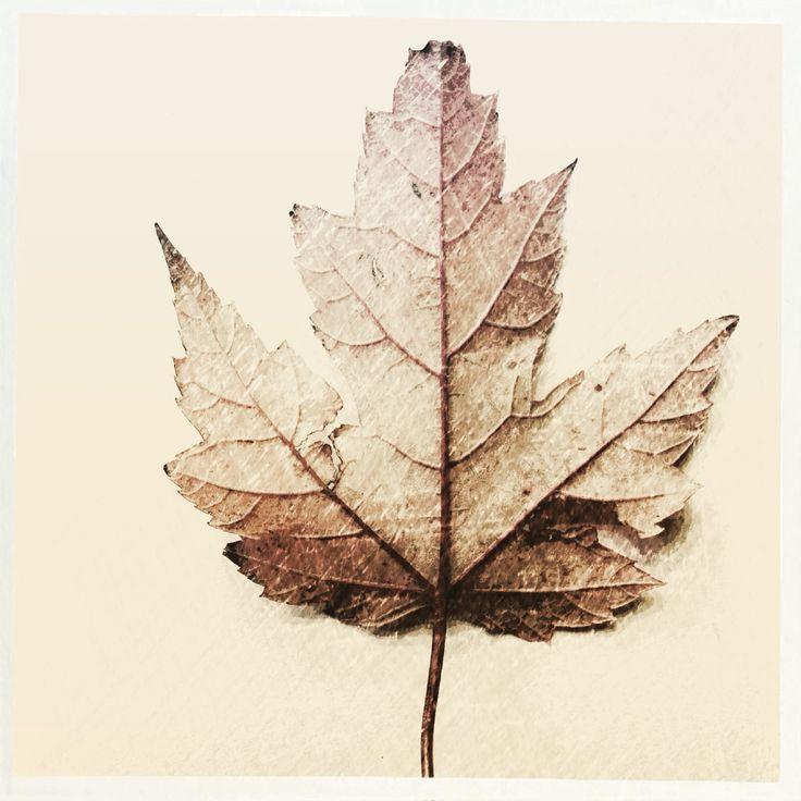 Autumn Leaf study  | By Josie Attley www.instagram.com/josieattley