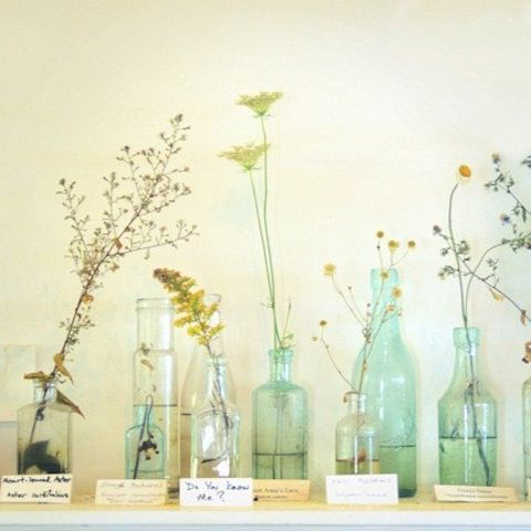 Love the humbleness and simplicity of this arrangement, the smart variety of shapes and sizes of both bottles and plants. Good feng shui decor for East or Southeast bagua areas http://fengshui.about.com/od/glossaryofterms/g/bagua.htm of your home, as well as anywhere you need a reminder that very little is needed to be content and happy :) More tips: http://FengShui.About.com