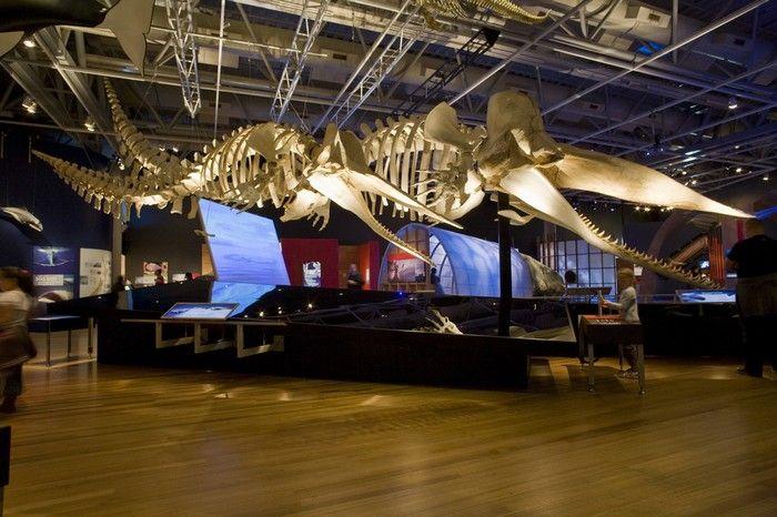 Museu da Nova Zelândia - Wellington, Nova Zelândia