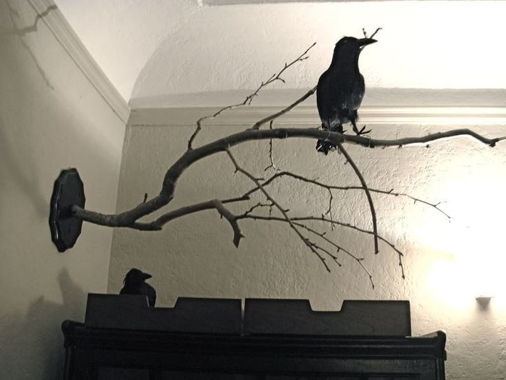 I hadn't thought of mounting a branch on a base for my ravens. I wonder how likely it is that the branch wouldn't split?