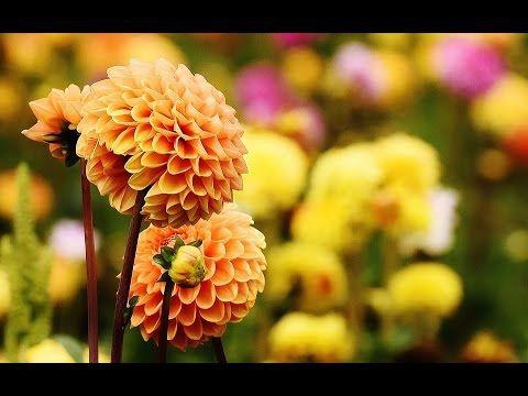 Удачные беседы: формула цветника