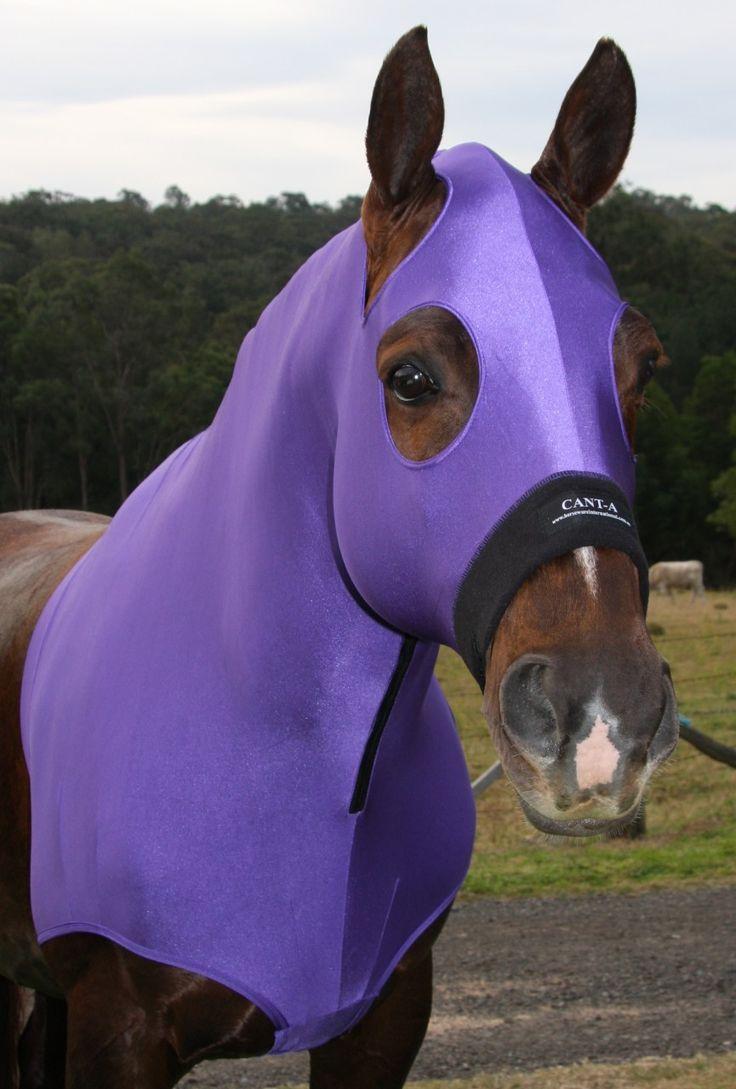 Ashbree Saddlery - Lycra Horse Hood and Bib, $49.95 (http://www.ashbree.com.au/lycra-horse-hood-and-bib/)