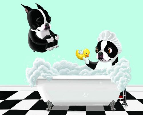 Bath Time - 11 x 14 Boston Terrier Dog Art by rubenacker on Etsy https://www.etsy.com/listing/80077016/bath-time-11-x-14-boston-terrier-dog-art