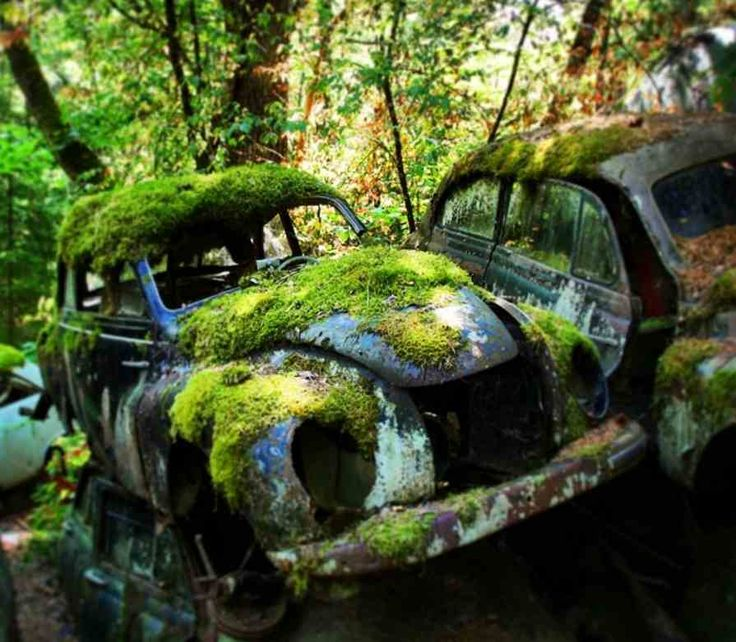 Båstnäs car cemetery - Around 1,000 vintage cars lie here overcome by nature. Until 1950, 2 brothers collected and disassembled cars with the purpose of selling the parts for profit in Norway. It has been abanonded since the 1980s. More unique travel inspiration in Europe can be found on a map on www.broscene.com !
