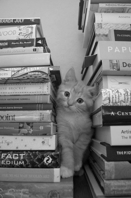 I'm in between books right now...