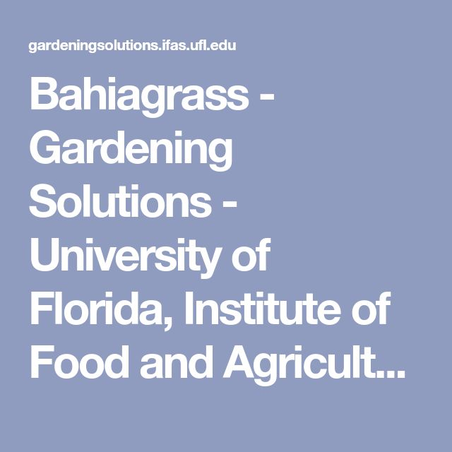 Bahiagrass - Gardening Solutions - University of Florida, Institute of Food and Agricultural Sciences