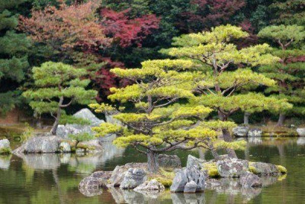 Zen Design Principles | Zen garden, Miniature zen garden ...