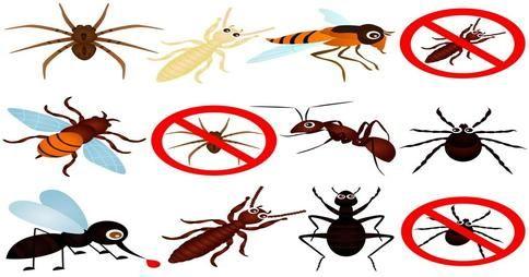 Los mejores 3 remedios de insecticidas naturales contra hormigas, arañas y todo tipo de bichos no deseados!