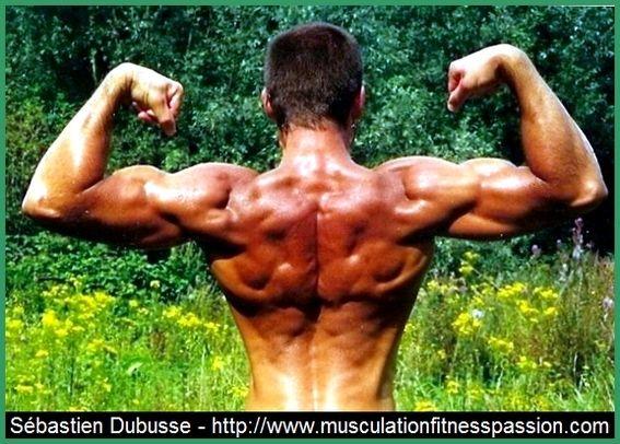 Augmentez votre largeur d'épaules avec les élévations latérales, 1ère partie, Sébastien Dubusse, blog musculationfitnesspassion