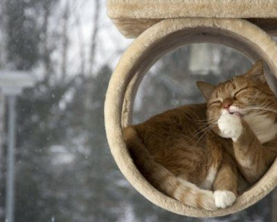 En komik kedi resimleri burada!