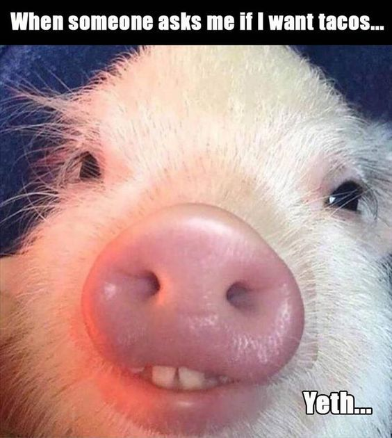 When someone asks... Funny Picture to share nº 14764