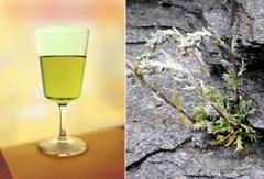 Genepì: ecco la ricetta per preparare il liquore digestivo