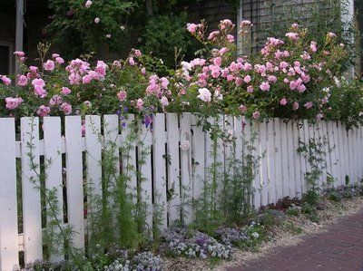 Picket fence, roses and flowers.....someday.