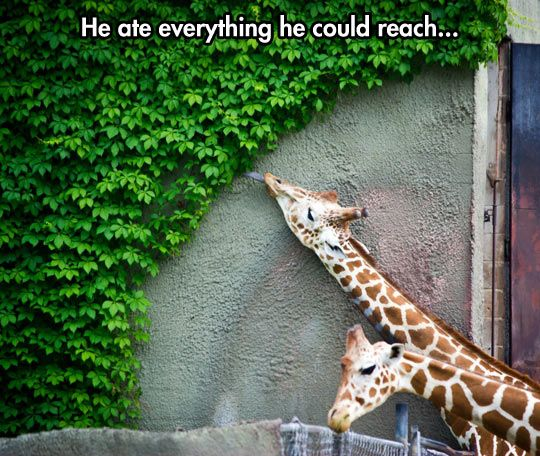 It's about 9:50 at the zoo…
