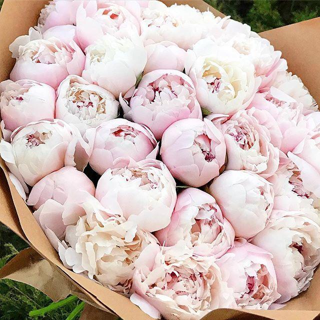 любимые #fashionblog #karinanigay #пионы #цветы