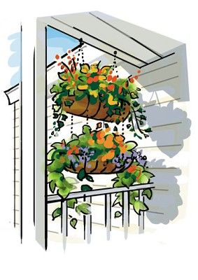 Vertical vegetables: stacking hanging baskets to double vertical space on the balcony. From Vertical Vegetables & Fruit: Creative Gardening Techniques for Growing Up in Small Spaces by Rhonda Massingham Hart on The Telegraph.