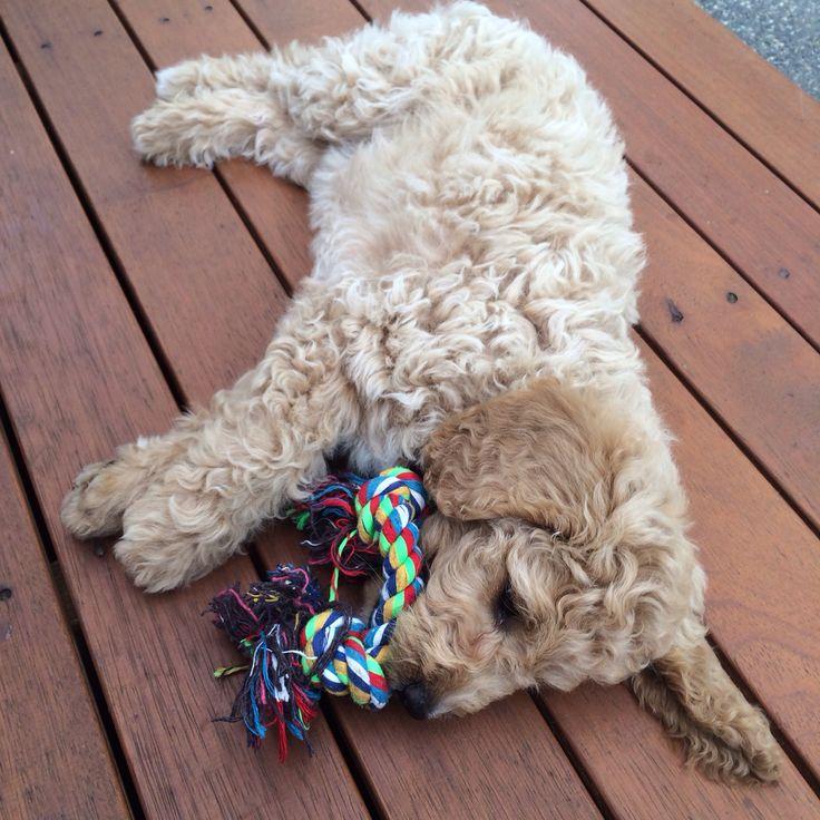 My puppy Ruby ❤️