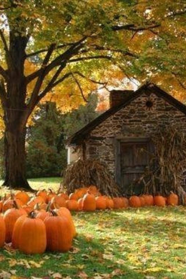 Iphone wallpaper tjn country living fall pictures - Pumpkin wallpaper fall ...