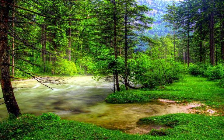 Yemyeşil Çam Ağaçlarının Arasından Akan Akarsu Manzarası