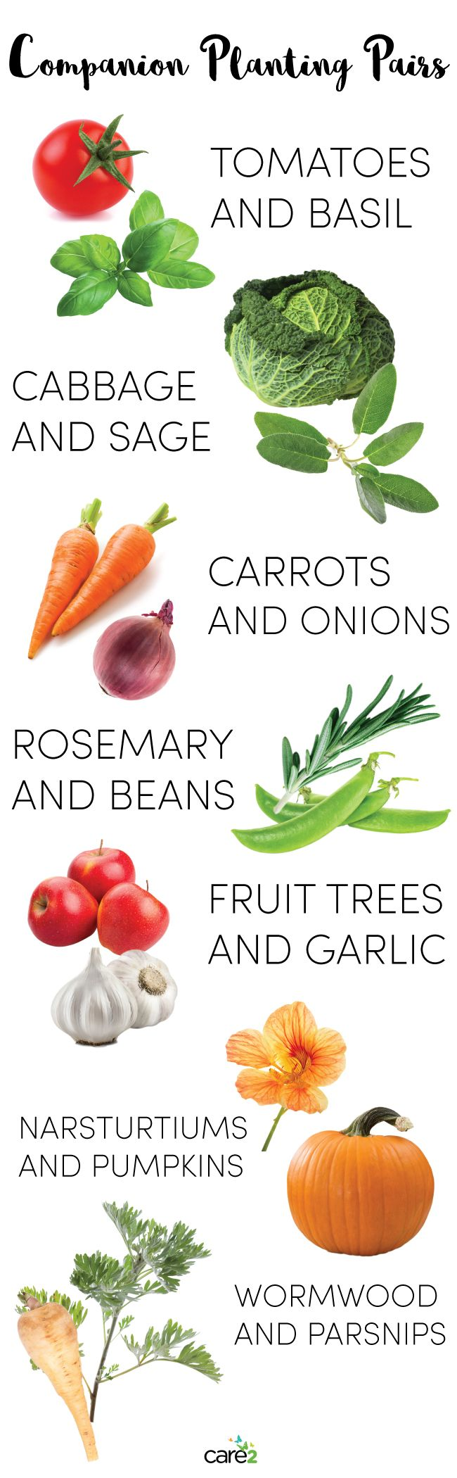 7 Phenomenal Companion Planting Pairs                                                                                                                                                                                 More