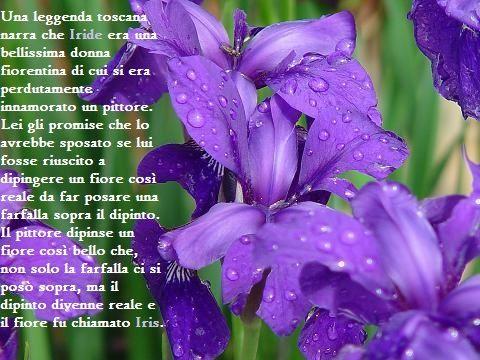 Il fiore della saggezza. Se regalato, esprime simpatia e ammirazione.