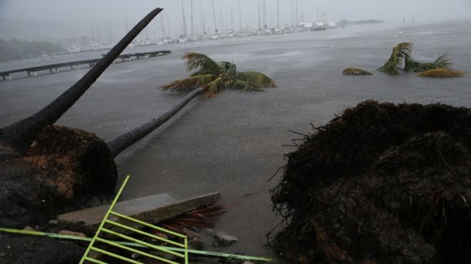Palm trees knocked over and floating in floodwaters in Puerto Rico