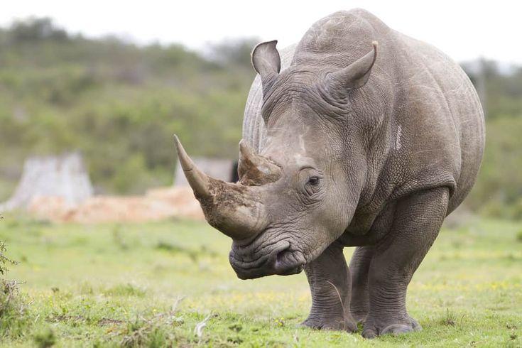 11++ Largest animal on earth ideas