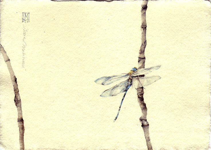 LIBELLULA. acquerello su carta a mano, 14x21 cm circa, anno 2006