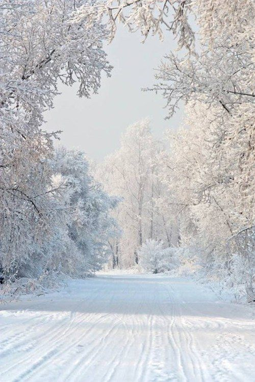 This reminds me of the road in front of our house when I was little.  I loved it when it snowed and there were very few cars