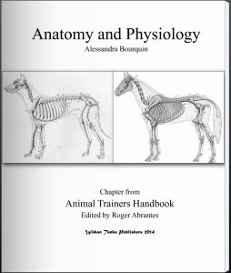 """""""Anatomy and Physiology"""" By Alessandra Bourquin"""