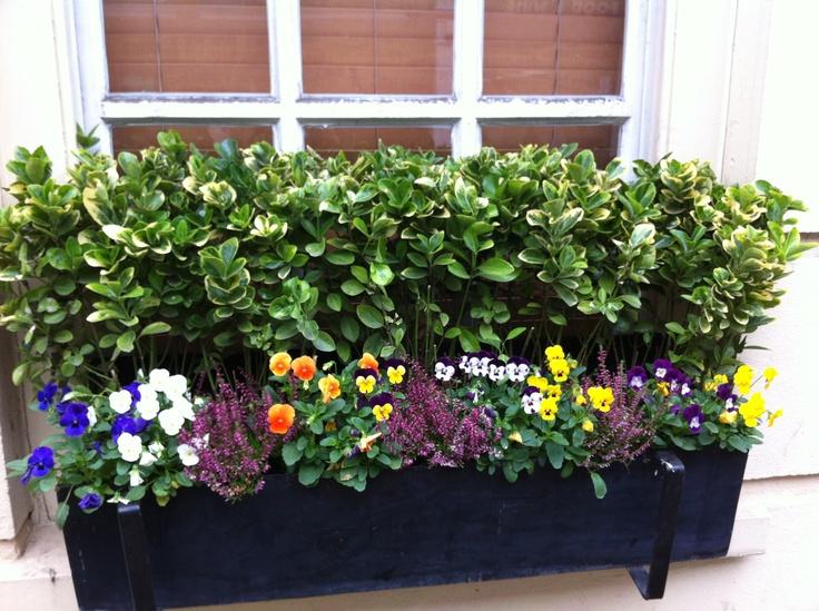 Plantas para jardineras exteriores finest mueble para plantas en blanco con dos niveles silla - Plantas para jardineras exteriores ...