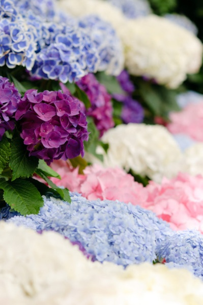 purple, pink, white, blue flowers