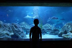 TWA-0048629 © WestPix AQWA (Aquarium of Western Australia) in Hillary's is approaching it's twenty five year anniversary. Rocco Darbyshire (6yrs) from Roleystone takes a look into the aquarium. 14/01/13. Picture : Lincoln Baker/The West Australian.