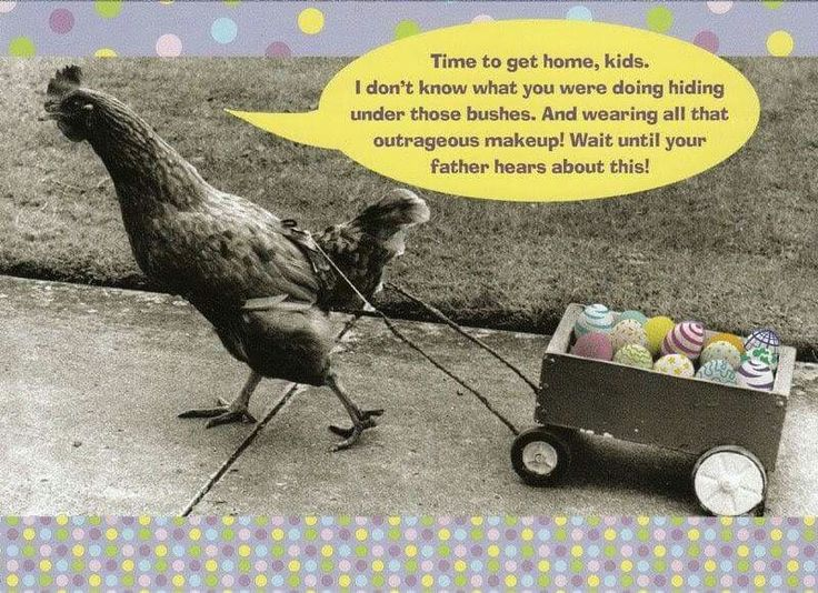 Best 25 Chicken Quotes Ideas On Pinterest: 25+ Best Ideas About Chicken Humor On Pinterest
