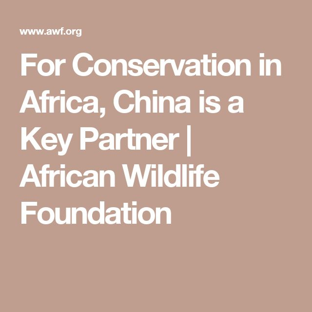 For Conservation in Africa, China is a Key Partner   African Wildlife Foundation