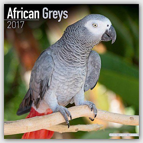 African Grey Calendar - African Grey Parrot Calendar - Parrot Calendar - Calendars 2016 - 2017 Wall Calendars - Bird Calendars - Monthly Wal