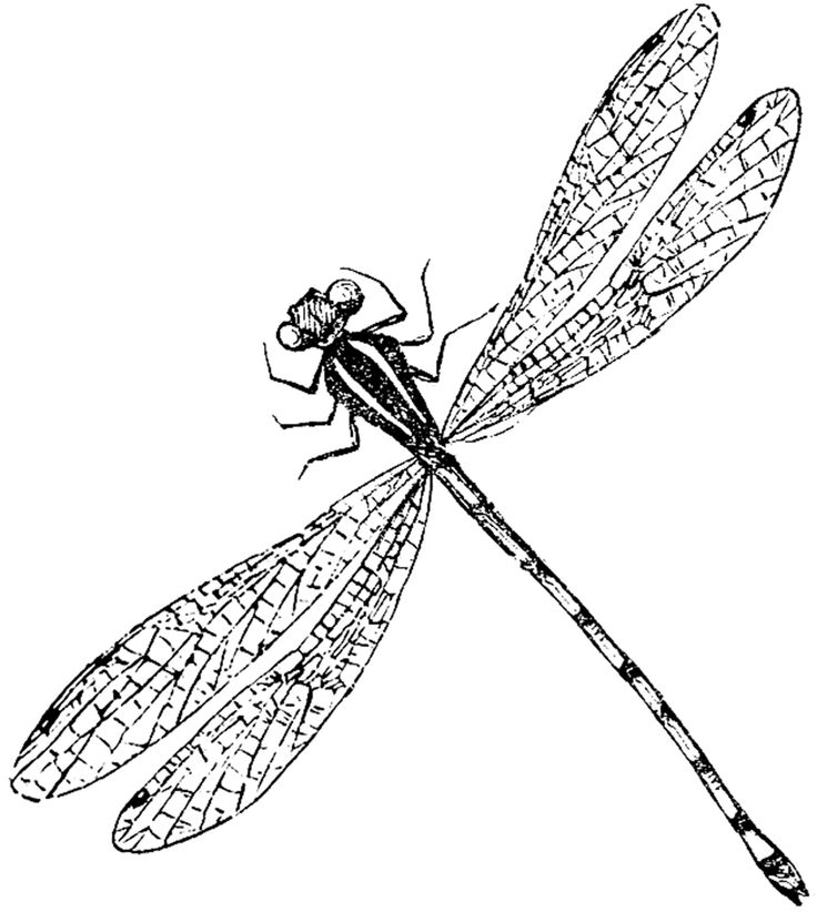 Graphics Fairy - Antique Dragonfly Image