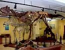 Museo de Paleontología, Cuidad Delicias.  Una de las exhibiciones más importantes de la región. Aquí se puede encontrar colecciones de caracoles fosilizados, peces, plantas, esqueletos de dinosaurios, mamuts y una ballena gris.  (639) 474-4068|pág. web  $10 general  Diario 9 a 19 hr  Av. Río Chuviscar Nte. No. 2