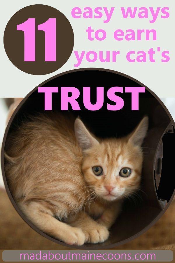 How To Gain A Cat S Trust Cats Cat Hacks Pets